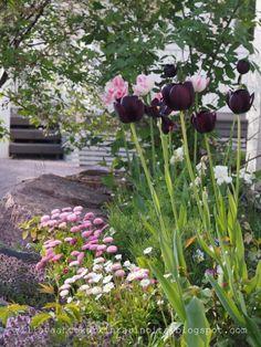 Kesätunnelmia / Summer Moods Garden Inspiration, Plants, Beautiful Gardens, Flowers, Countryside, Patios, Country Gardening, Garden