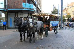 Pläsi and Bogas in city of Tampere. Percheron studs.