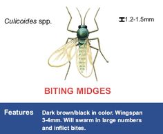 Identification.Flying Pests
