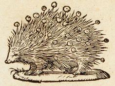 Emblem - Porcupine 2