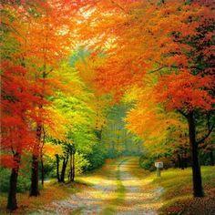 Vibrant Fall Colors !!
