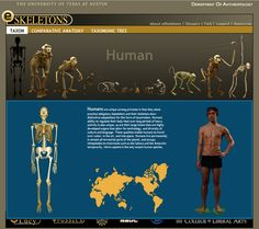 9 different Human anatomy sites to choose from