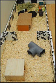 DIY cage for Guinea pigs (bookshelf) | Marsvin iFokus