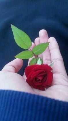 Souad mohamed al-sabah ( - Flores