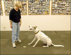 """Teaching Your Dog to """"Leave It"""" On Cue - Whole Dog Journal Article Dog Training School, Dog Training Courses, Dog Training Methods, Basic Dog Training, Dog Training Techniques, Training Your Puppy, Training Dogs, Puppy Obedience Training, Positive Dog Training"""