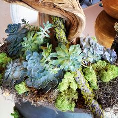 What a great alternative or addition to fresh cut flowers. With this seasons driftwood, Spanish moss, reindeer moss, echeveria which is a type off succulent!