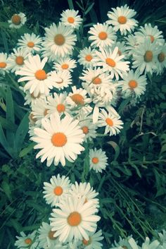 Daisies - my all time high favorite flower.. Nothing can messure it self with those...