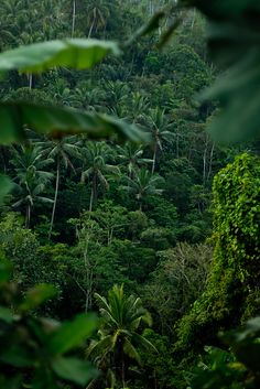 Wherever you look, it is Trees, Trees,Trees..... Bali, Indonesia | Flickr - Photo Sharing!