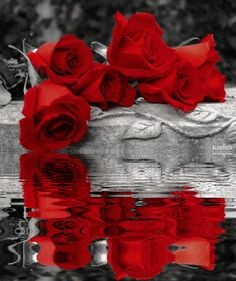 Splash of Color Beautiful Gif, Beautiful Roses, Beautiful Flowers, Color Splash, Rosas Gif, Amazing Gifs, Water Reflections, Flower Photos, Belle Photo