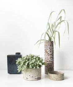One plant - 3 stylings - Inspire & Create