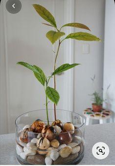 Container Flowers, Balcony Garden, Garden Plants, Fruit Garden, Balcony Plants, Hanging Plants, Indoor Plants, Indoor Gardening, Plantas Indoor