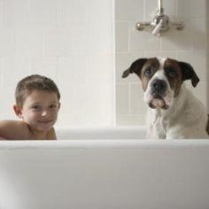 Recipe for Homemade No-Rinse Dog Shampoo