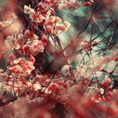 Stephanie Jung Photography - Blossoms