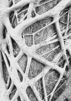 Wood Weave - intertwining tree branches; natural textures; organic pattern inspiration