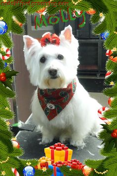 Groomed at Pretty Paws LLC, Radcliff Ky