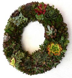 Living Wreath – How to make a living wreath with succulents