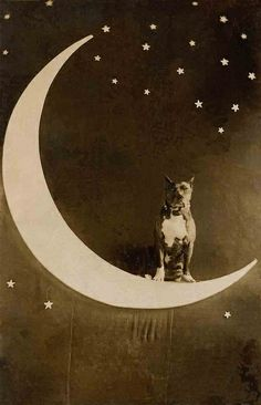 Dog on the moon from the Libby Hall Collection. Paper moon photos were all the rage in the and What a wonderful image of a very patient pooch. Baby Dogs, Dogs And Puppies, Doggies, Pitbulls, Nanny Dog, Vintage Moon, Paper Moon, Pit Bull Love, Pics Art