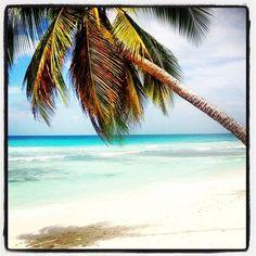#Palm #Trees #Ocean #Beach #Sea #Sand #Island #Caribbean