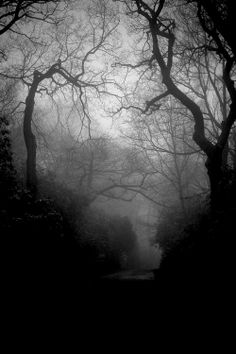 """""""In the middle of the journey of our life I found myself astray in a dark wood where the straight road had been lost."""""""