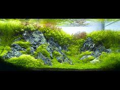Beautiful planted aquarium by Amano