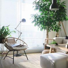 【植物インテリア図鑑】オススメの種類、部屋別コーデを総ざらい | RoomClip mag | 暮らしとインテリアのwebマガジン