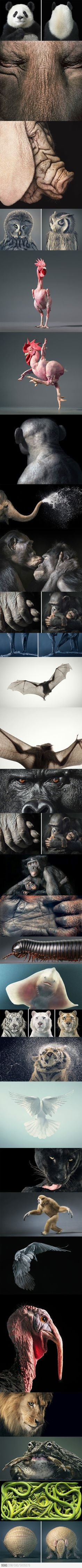 Amazing Animal Portraits by Tim Flach. S)