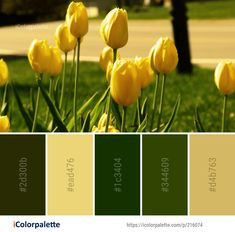 Color Palette Ideas from Flower Yellow Plant Image Colorful Flowers, Wild Flowers, Yellow Plants, Plant Images, Find Color, Flower Images, Colour Palettes, Color Shades, Mellow Yellow