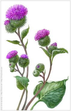 Plants by Irina Vinnik, via Behance