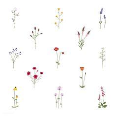 Set collection of wild flowers vector illustration Free Vector Simple Flower Drawing, Simple Flowers, Colorful Flowers, Flower Art, Wild Flowers, Simple Flower Tattoo, Simple Flower Painting, Colorful Birds, Cactus Flower