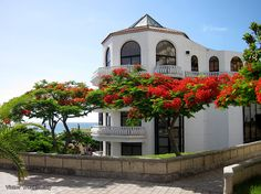 Five Things You Want to Know About Tenerife, Canary Islands
