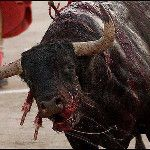 "#2014sacrificiocero #LOLATQM MUERTE A LOS TOREROS ""... on Twitpic"