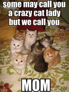 The kitty's are so freaking cute