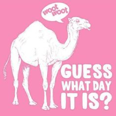 Happy Hump Day Pinners :)