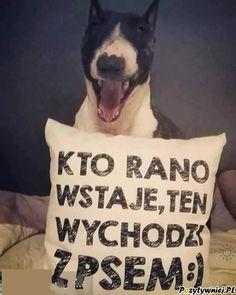 Man Humor, Motto, Dachshund, Sisters, Memes, Funny, Cute, Animals, Health