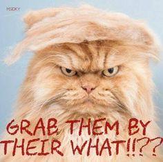 Bill ✔️. Trump is vile!     Bill Gibson-Patmore.  (curation & caption: @BillGP). Bill😄✔️