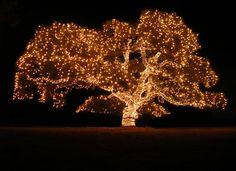 Tree Lighted Up