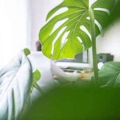 #homeofficeview 3 🌿 #stayhome #stayhealthy #myhomeismyjungle 💚 Plant Leaves, News, Plants, Instagram, Flora, Plant