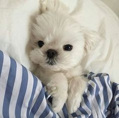 Cute Funny Animals, Cute Baby Animals, Animals And Pets, Cute Dogs And Puppies, Baby Dogs, Doggies, Fluffy Animals, Cute Creatures, Fur Babies