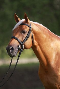 - sweet photo Looks like a quarter horse with a jaw like that. MoreLooks like a quarter horse with a jaw like that. Big Horses, Types Of Horses, Horse Love, Most Beautiful Animals, Beautiful Horses, Beautiful Creatures, Horse Photos, Horse Pictures, Zebras