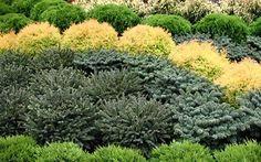 ПРОДАЖА РАСТЕНИЙ, садовых цветов, декоративных растений. Оптовая и розничная продажа растений