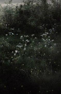 Dark Green Aesthetic, Nature Aesthetic, Arte Peculiar, Slytherin Aesthetic, Dark Paradise, Forest Fairy, Dark Forest, Aesthetic Pictures, Aesthetic Wallpapers