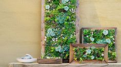 Plain Ideas Living Wall Art Https Img1 Sunset Timeinc Net Sites Default File