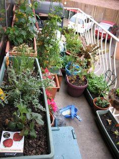 Apartment Gardening Guide U2013 Information On Apartment Gardening For Beginners