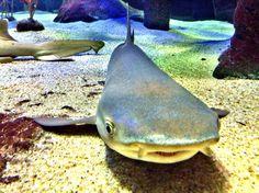 Sopan je..   #shark