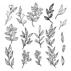 Hand Drawn Branches With Leaves Collection. Decorative Elements For Decoration Flower Drawing Tutorials, Flower Sketches, Vine Tattoos, Flower Tattoos, Tattoo Sketches, Tattoo Drawings, Chemistry Tattoo, Tattoo Outline Drawing, Tattoo Project