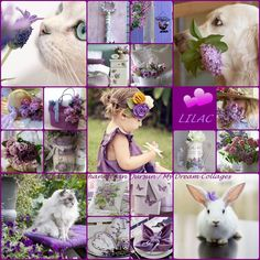 '' Lovely Lilac '' by Reyhan Seran Dursun