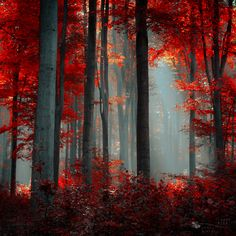 We're loving this dramatic image titled 'Flames' by Ildiko Neer. #photography #inspiration