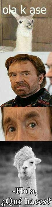 """Nunca le digas """"Ola k ase"""" a Chuck Norris..."""