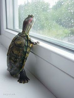 i love to watch rain drops race out the window and silently cheer them on :-)