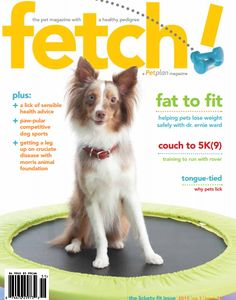 Get a lick of sensible pet health advice in the new Lickety Fit issue of Petplan's fetch! magazine